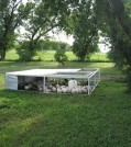 Pastured poultry pen with a nice batch of broilers.